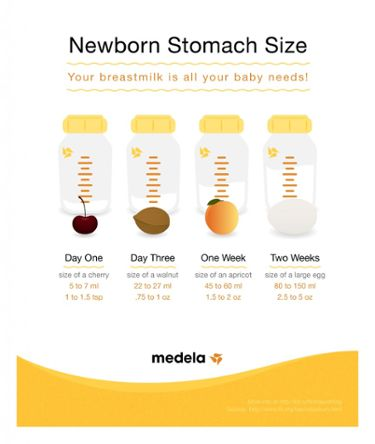 Newborn Stomach size infographic